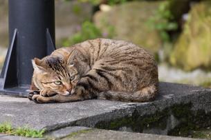 ホウトン猫村のキジトラの猫の写真素材 [FYI04492825]
