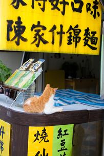 猫村駅前飲食街、カウンターで休むネコの写真素材 [FYI04492826]
