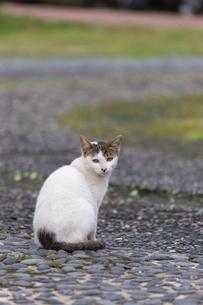 ホウトンの猫村で暮らすネコの写真素材 [FYI04492827]