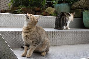 台湾猫村、空を見上げる猫の写真素材 [FYI04492841]