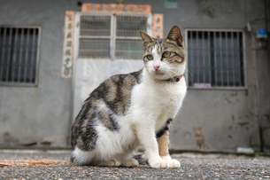 ホウトン猫村、保護区のネコの写真素材 [FYI04492843]