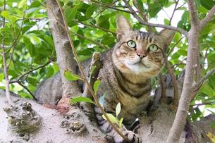 ホウトンの猫村、木に登ったネコの写真素材 [FYI04492844]