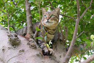 ホウトンの猫村、樹上のネコの写真素材 [FYI04492845]