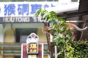 ホウトン駅前、塀に登った猫の写真素材 [FYI04492846]
