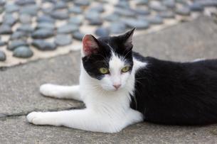 ホウトンの猫村、石畳に寝そべる黒白ネコの写真素材 [FYI04492847]