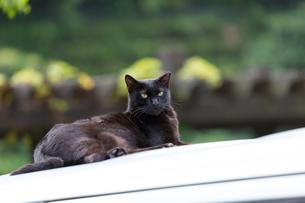 台湾ホウトン、猫村の黒猫の写真素材 [FYI04492865]