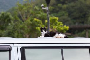 台湾猫村、ルーフで寝そべる黒白のネコの写真素材 [FYI04492867]