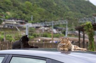 台湾猫村、ボンネットでくつろぐ二匹の猫の写真素材 [FYI04492873]