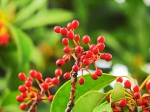 日の当たる花園の中の赤い実の写真素材 [FYI04493230]