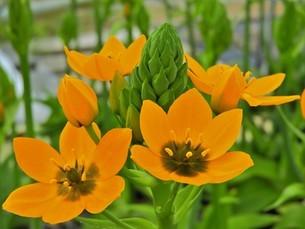花園の中の橙色の花の写真素材 [FYI04493240]