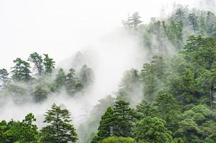 霧の山並みの写真素材 [FYI04493273]