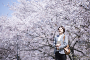 桜とスーツを着た若いビジネスウーマンの写真素材 [FYI04493559]