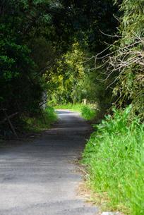 田舎道の写真素材 [FYI04493860]