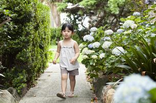紫陽花の横を歩いている女の子の写真素材 [FYI04494336]