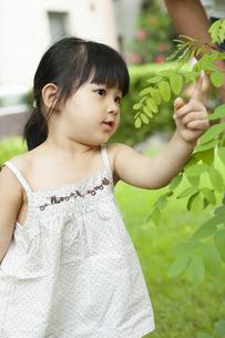 葉っぱを触っている女の子の写真素材 [FYI04494340]