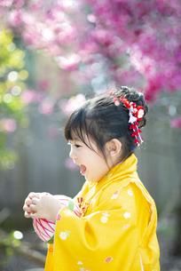 七五三の着物を着て笑っている女の子の写真素材 [FYI04494567]