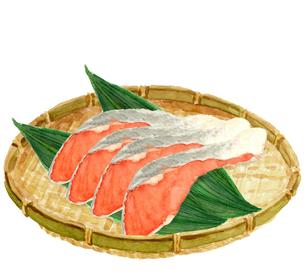水彩 ザルに並べた鮭の切り身のイラスト素材 [FYI04494588]