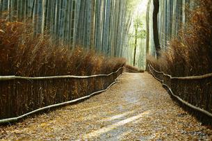 京都 嵐山 竹林の小径の写真素材 [FYI04495289]