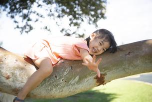 木登りをしている女の子の写真素材 [FYI04495411]