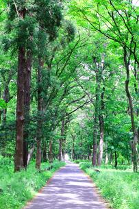 神奈川県 相模原中央緑地(木もれびの森)の写真素材 [FYI04495697]