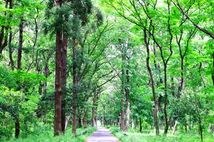 神奈川県 相模原中央緑地(木もれびの森)の写真素材 [FYI04495698]
