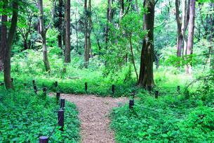 神奈川県 相模原中央緑地(木もれびの森)の写真素材 [FYI04495701]