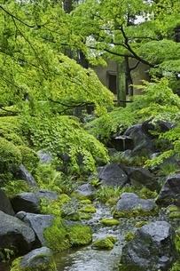 新緑の大田黒公園の写真素材 [FYI04496018]