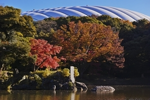 小石川庭園の写真素材 [FYI04496019]