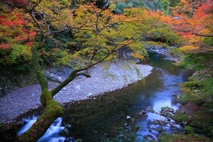 高雄清滝川紅葉の写真素材 [FYI04496121]