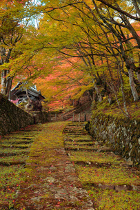 百済寺参道石畳紅葉の写真素材 [FYI04496133]