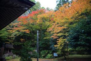 百済寺境内紅葉の写真素材 [FYI04496150]