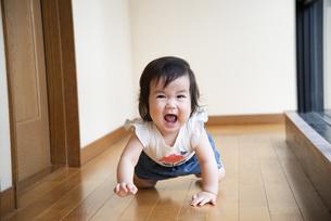 フローリングでハイハイをしている赤ちゃんの写真素材 [FYI04496494]