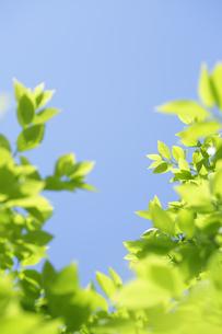 新緑の写真素材 [FYI04496656]