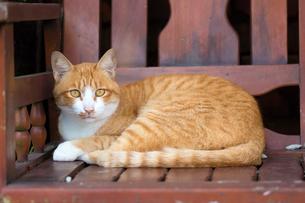 ホウトン猫村、朱色の椅子に横たわる猫の写真素材 [FYI04496715]
