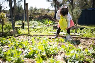 畑に水をあげている女の子の写真素材 [FYI04496815]