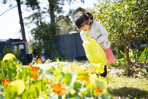 お花に水をあげている女の子の写真素材 [FYI04496817]