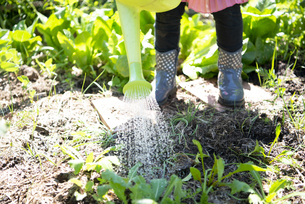 畑に水をあげている女の子の足元の写真素材 [FYI04496822]