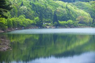 県民の森荒沼の写真素材 [FYI04497019]