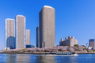 桜咲く東京ウォーターフロントと観光船の写真素材 [FYI04497168]