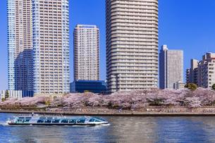 桜咲く東京ウォーターフロントと観光船の写真素材 [FYI04497169]