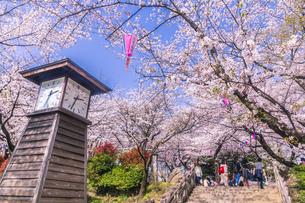 飛鳥山公園の桜と時計台の写真素材 [FYI04497187]