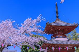桜と多宝塔 川越喜多院の写真素材 [FYI04497197]