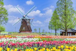 チューリップとオランダ風車 あけぼの山農業公園の写真素材 [FYI04497202]