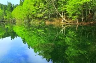 新緑の龍ヶ窪の水の写真素材 [FYI04497251]
