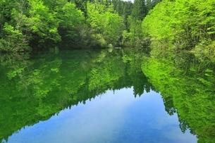 新緑の龍ヶ窪の水の写真素材 [FYI04497252]