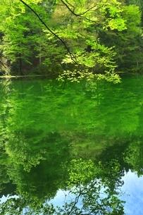新緑の龍ヶ窪の水の写真素材 [FYI04497259]