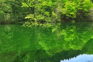 新緑の龍ヶ窪の水の写真素材 [FYI04497260]
