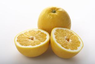 ジューシーオレンジの写真素材 [FYI04497431]
