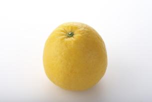 ジューシーオレンジの写真素材 [FYI04497484]