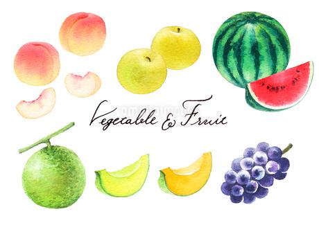 夏の果物のイラスト素材 [FYI04497725]